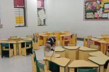 Fumigation in Delhi Public School Mihan