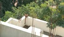 Video: Leopard strays into Acharya Vinoba Bhave Rural Hospital in Wardha